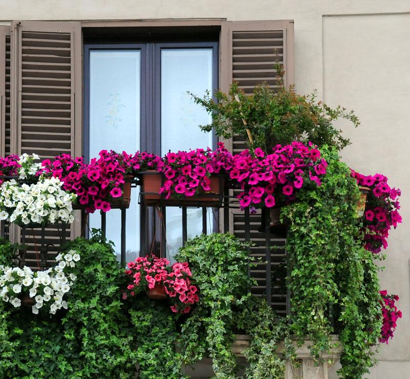 Piante Balcone Est : Troppa o troppo poca quanta acqua dare alle piante