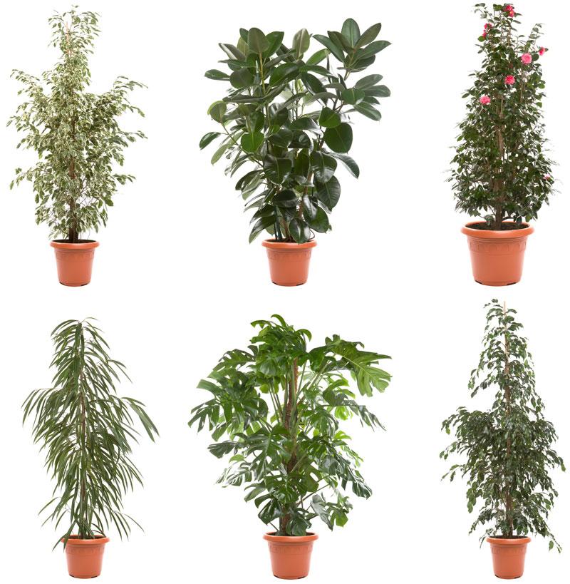 Troppa o troppo poca quanta acqua dare alle piante for Piante da vaso per esterno