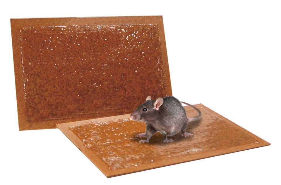Come liberarsi velocemente dai topi da casa – Mondo Verde